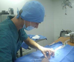 хирургия собак и кошек