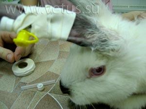 Лечение диареи у кроликов