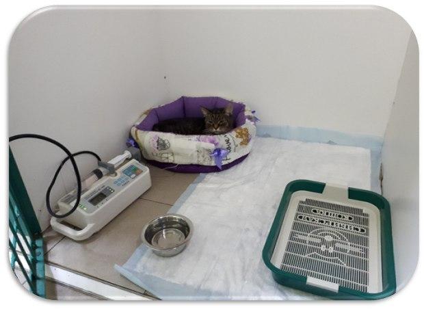 ветеринарный стационар