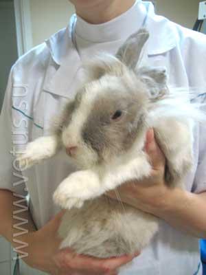 Если кролик не ест - анорексия