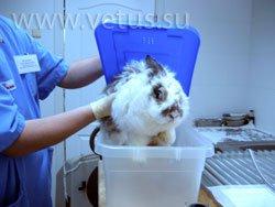 Индукционная камера для кролика