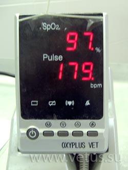 Пульсоксиметр при анестезии для кролика