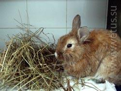 Больной кролик в стационаре ветеринарной клиники в Санкт-Петербурге