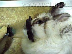 Прозрачная лицевая маска при анестезии для кролика