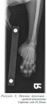 Рентгенография конечности кошки